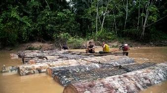 Perú acusa a madereros del Amazonas de asesinato de ambientalistas