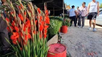 Es la flor que nace en Michoacán y brota en Navojoa
