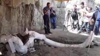 Trabajadores de San Antonio Xahuento, Tultepec, en el Estado de México, descubrieron la primera trampa para mamuts en el mundo en un ejido municipal.