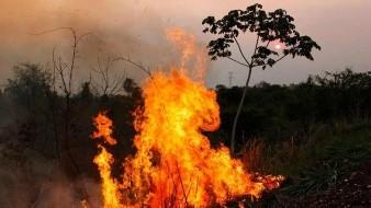 Hay en Australia 575 mil hectáreas calcinadas por incendios forestales