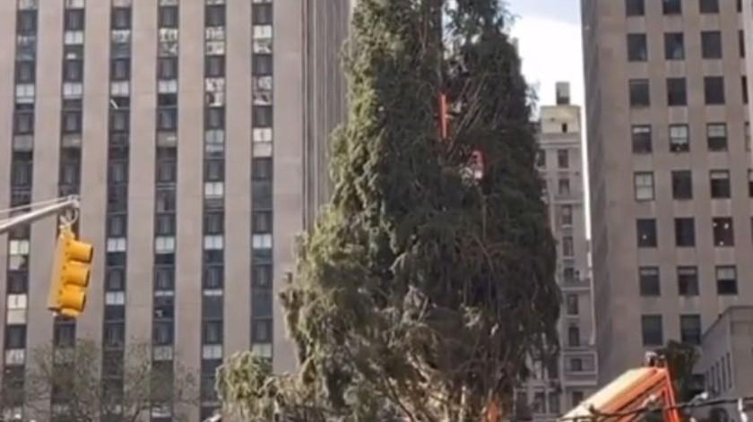 El árbol llegó al centro comercial en Manhattan, frente a la catedral San Patricio, tras recorrer 96.5 kilómetros desde el patio del hogar de Carol Schultz.(Cortesía Instagram)