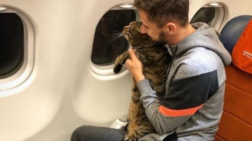Aerolínea 'castiga' a pasajero que la engañó para llevar a bordo su gato gordo(Cortesía)
