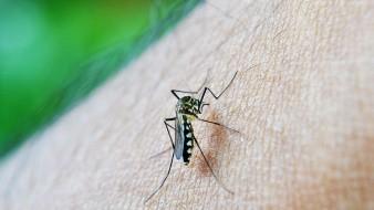 Se registran más de 32 mil casos de dengue en México