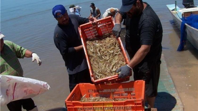 El precio del camarón de cultivo se desplomó en un 40% en el segundo ciclo de la temporada 2019.(Banco Digital)