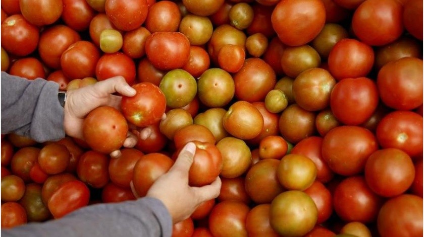 En 2018, según la información de la CBP, el virus fue detectado y erradicado de un invernadero de tomates en California.(EFE)