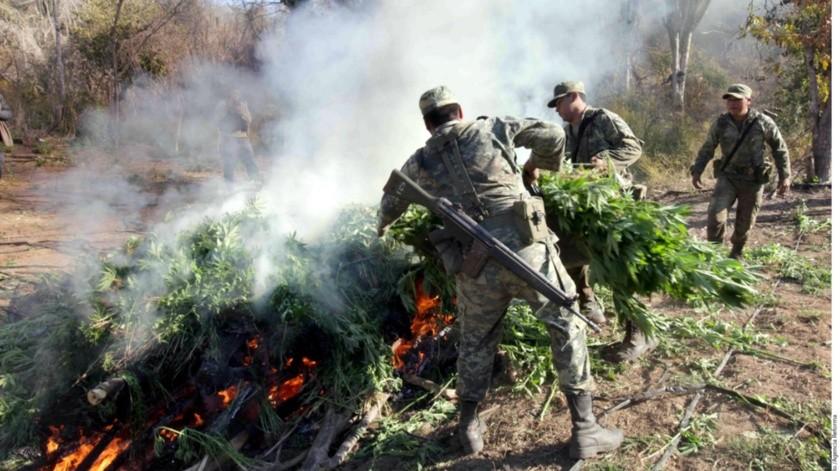 La cifra ha disminuido, tal vez, por la legalización de la mariguana en Estados Unidos.(Banco Digital)