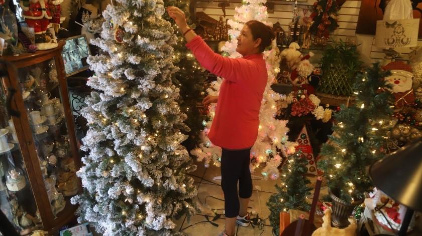 Los comerciantes buscan evitar la tala de árboles para estos festejos decembrinos.(Jesus Bustamante)
