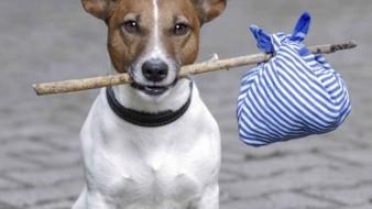 La adopción de mascotas trae grandes beneficios.