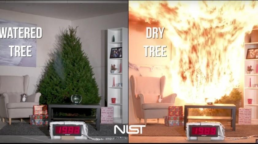 Evita incendios con tu pino de Navidad(Cortesía)