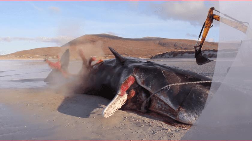 Durante la necropsia el animal explotó arrojando partes de él hacia el exterior.
