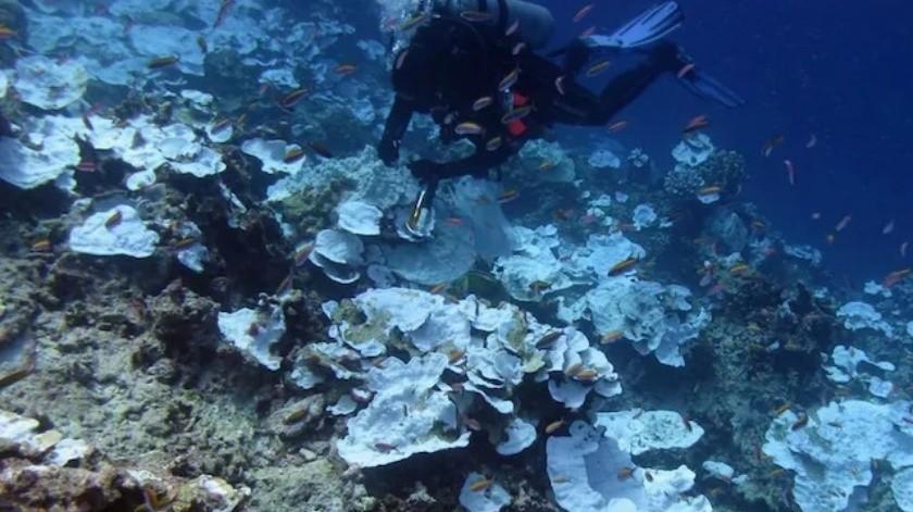 Poner altavoces al lado de los arrecifes de coral muertos ayuda a resucitarlos: Estudio(AP)