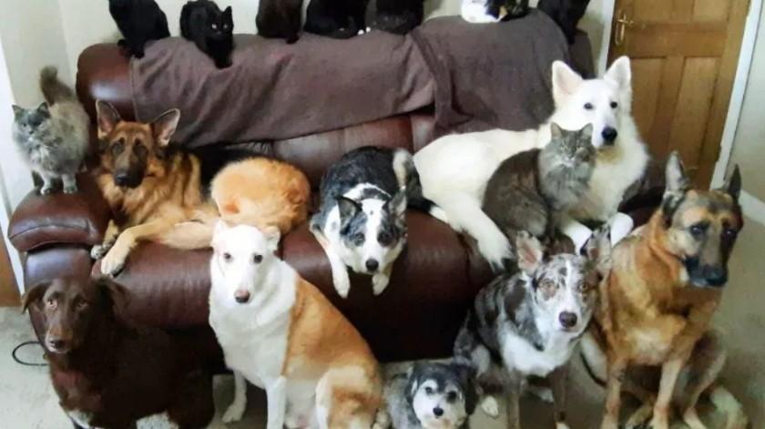 Logra 'sincronizar' para una foto perfecta a sus 17 mascotas(Kennedy News and Pictures)