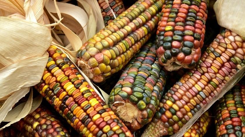 El maíz es la estrella de muchos platillos de la comida mexicana, con el se puede experimentar y confiar en que su sabor será delicioso, porque todo lo que se mezcla con el maíz es delicioso.
