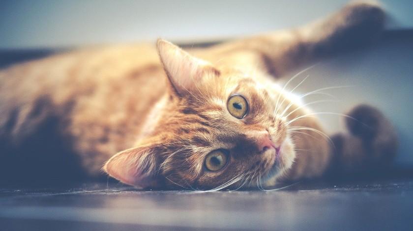 Rescata del interior de una pared compartida a un gato abandonado(Pixabay)