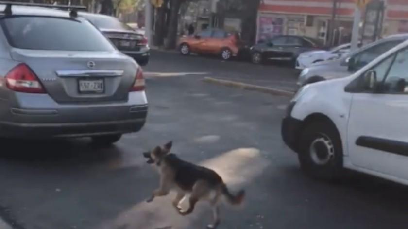 VIDEO: Perrito leal persigue a sus dueñas tras ser abandonado en la calle(Captura de video)