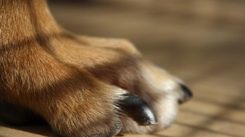 Vecinos denuncian envenenamiento masivo de mascotas en Morelia.(Pixabay)