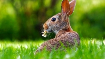 En total, hay 30 mil 178 especies en grave peligro de desaparecer.