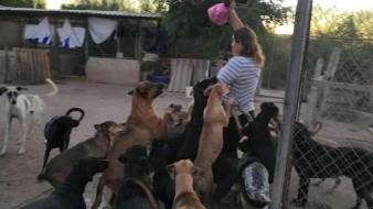 Perros abandonados se convierten en un problema en Navojoa