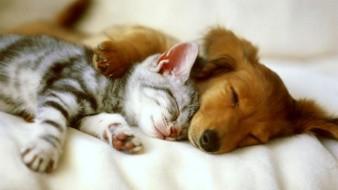 Actualmente, los propietarios de mascotas han tomado una mayor conciencia de las prácticas preventivas para su cuidado.