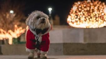 Comparte estas fiestas decembrinas con tu mascota.