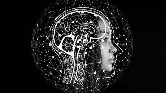 Descubren un nuevo tipo de señal en el cerebro humano