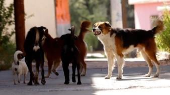 Reportan 400 perros perdidos en diciembre