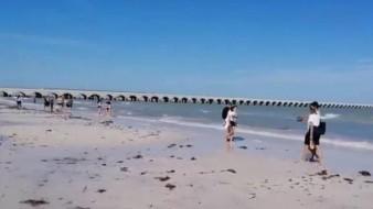 Mar se aleja 40 metros de México preocupando a pescadores
