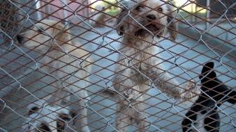 Anuncia alcaldesa adopción gratis de animales en CEMCA