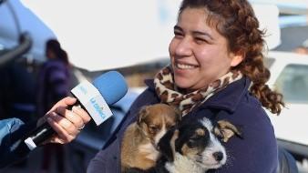 Adoptan cachanillas a más perros 'detenidos' por Control Animal