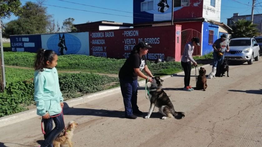 Personas de todas las edades acuden a mejorar el comportamiento de sus perros.(José Ibarra)