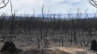 Megaincendios superan 'toda capacidad de extinción': Expertos