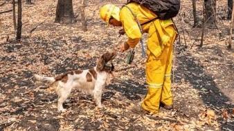 Desde el septiembre pasado, los incendios han arrasado una superficie de más de 80 mil kilómetros cuadrados y se han cobrado la vida de 28 personas.