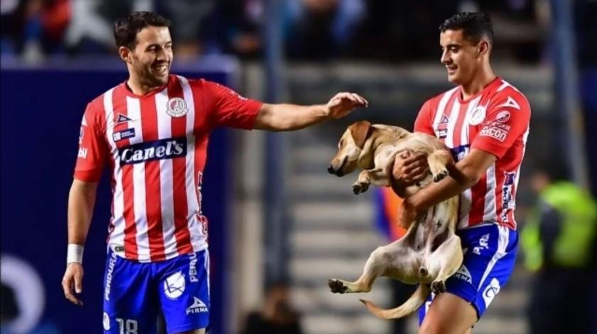 Perro invade cancha mientras San Luis vence a Cruz Azul(GH)