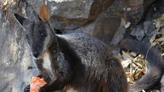 Buscan a animales sobrevivientes de fuego en Australia