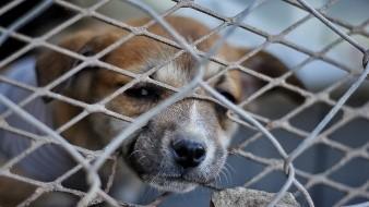 Buscan abrir albergue animal para Mexicali este año
