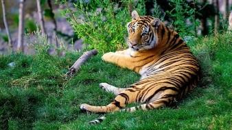Tigres y leones rescatados de circos llegan a Sudáfrica
