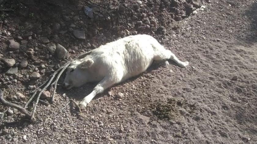 Reportan ganaderos muerte de animales(Cortesía)