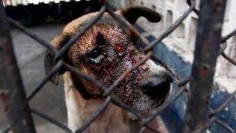 Aumentan multas por maltrato animal
