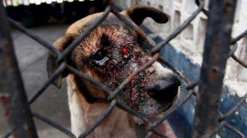Este inicio de año han aplicado más multas por maltrato animal.(Mayra Echeverría)