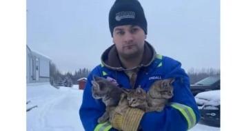 Salva a gatitos de congelarse; tenían su cola pegada al hielo