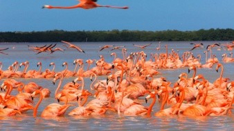 Celestún es conocido como conocido como la cuna del ecoturismo en México.