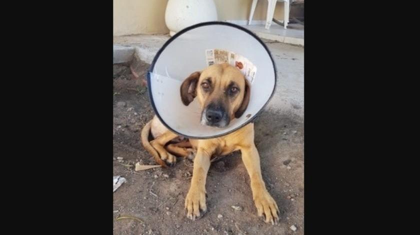 """La perrita """"Bolita"""" fue rescatada por maestros y alumnos del ITH."""