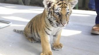 ¡Nuevo felino en el Ecológico!