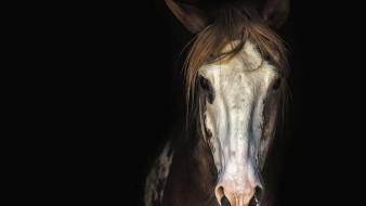 Menor resulta lesionado por caballo en Mesa del Seri