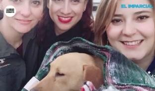 San Juanito Patas Cortas, increíble que el perro más aventurero algún día estuvo en situación de calle.
