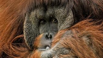 Este es el conmovedor momento que un orangután intenta ayudar a un hombre parado en un río ofreciéndole su brazo.