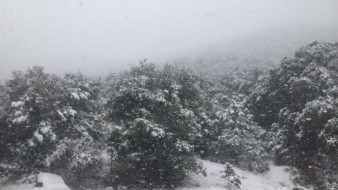 Nieva en la sierra de Cananea