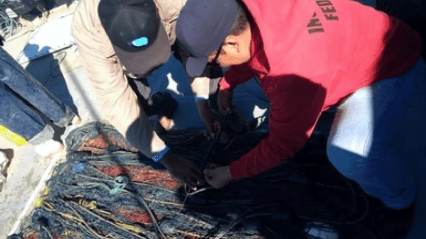 Investigan agresión a buque de Sea Shepherd en el Alto Golfo(Cortesía)