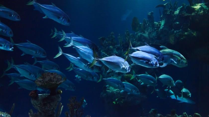 El nuevo acuario de Mazatlán de México contará con una inversión de 1.400 millones de pesos y han solicitado la orientación y asesoría del equipo de expertos de este espacio marino.(Pixabay.)