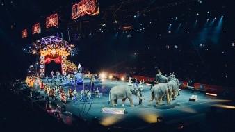 Proponen regreso de animales a circos